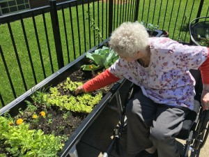 Gardening brings joy to elders at Liberty Care & Rehab.
